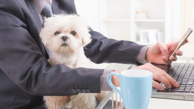 Photo of Business Owners: Should You Allow Pets in the Workplace?
