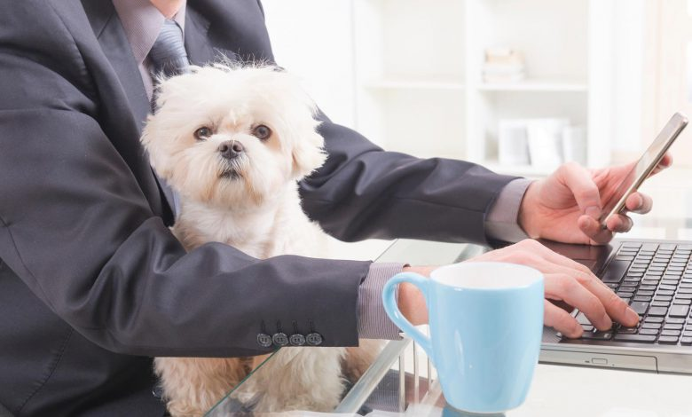 Business Owners: Should You Allow Pets in the Workplace?